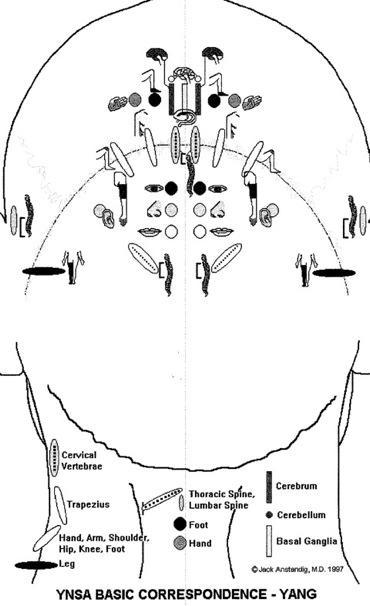 Scalp acupuncture points on the back of the head. on acupuncture points map, acupuncture needle placement map, face acupuncture map, foot acupuncture map, acupuncture meridian map, eye acupuncture map, nervous chinese acupuncture map, tongue acupuncture map, auricular acupuncture map, acupuncture brain map, ear acupuncture map,